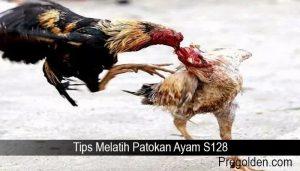 Tips Melatih Patokan Ayam S128
