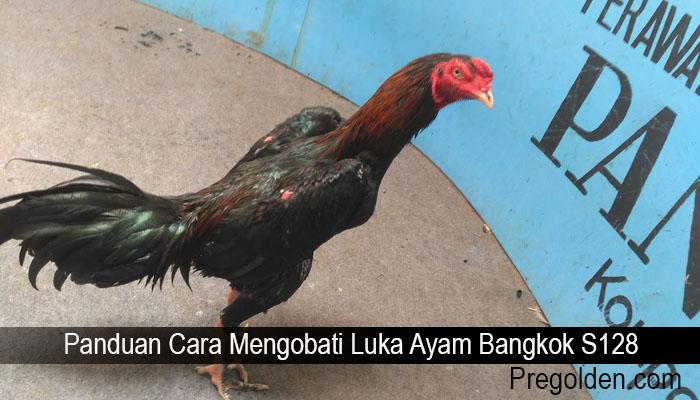 Panduan Cara Mengobati Luka Ayam Bangkok S128